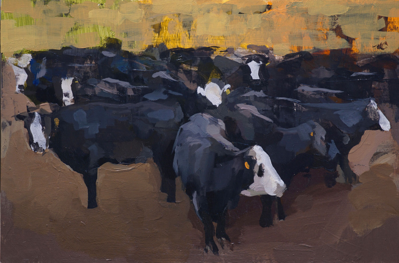 mark-crenshaw-17092-black-angus-cows-in-fall-corral.jpg