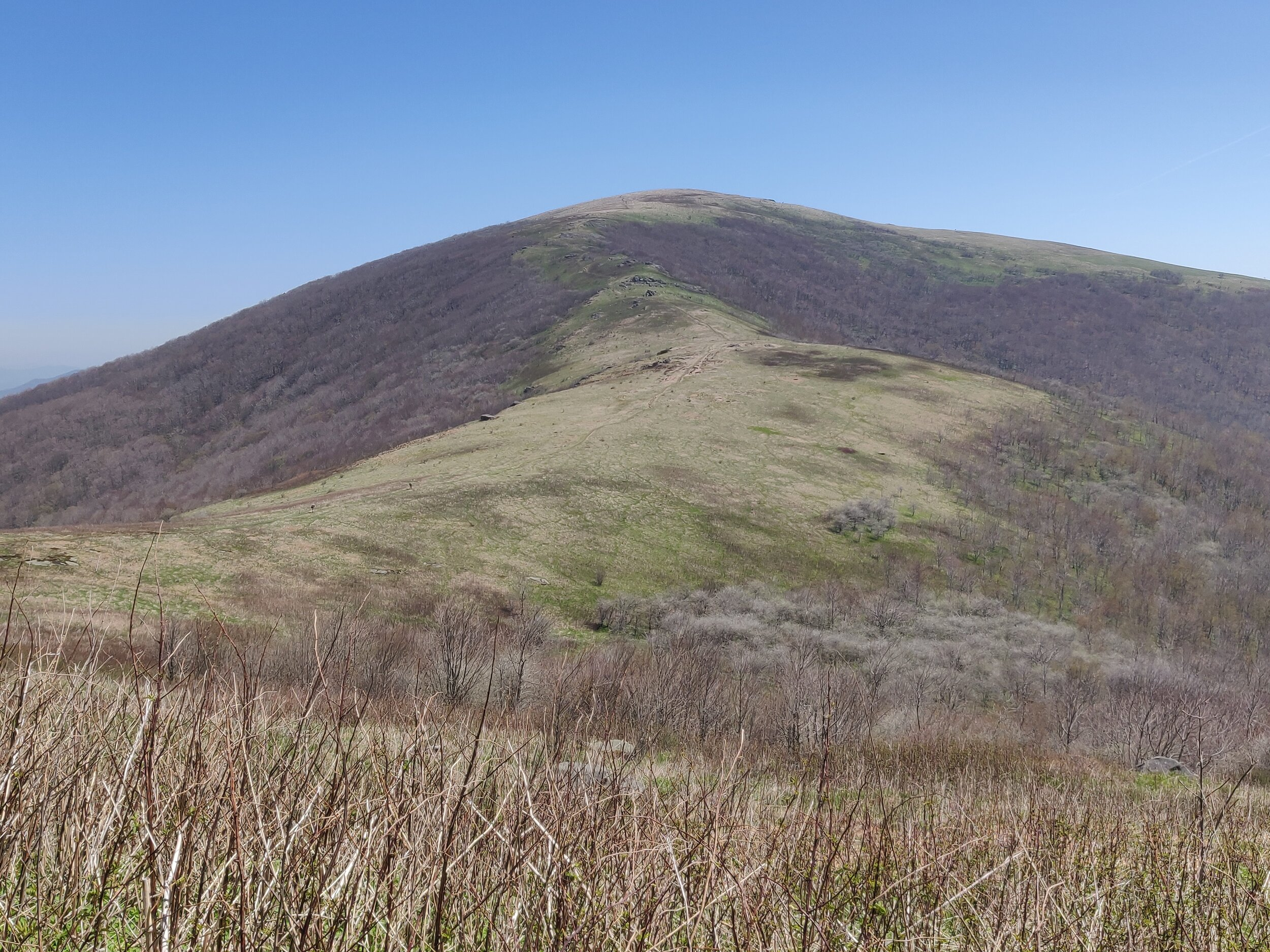 Roan Mountain - used for blog.jpg