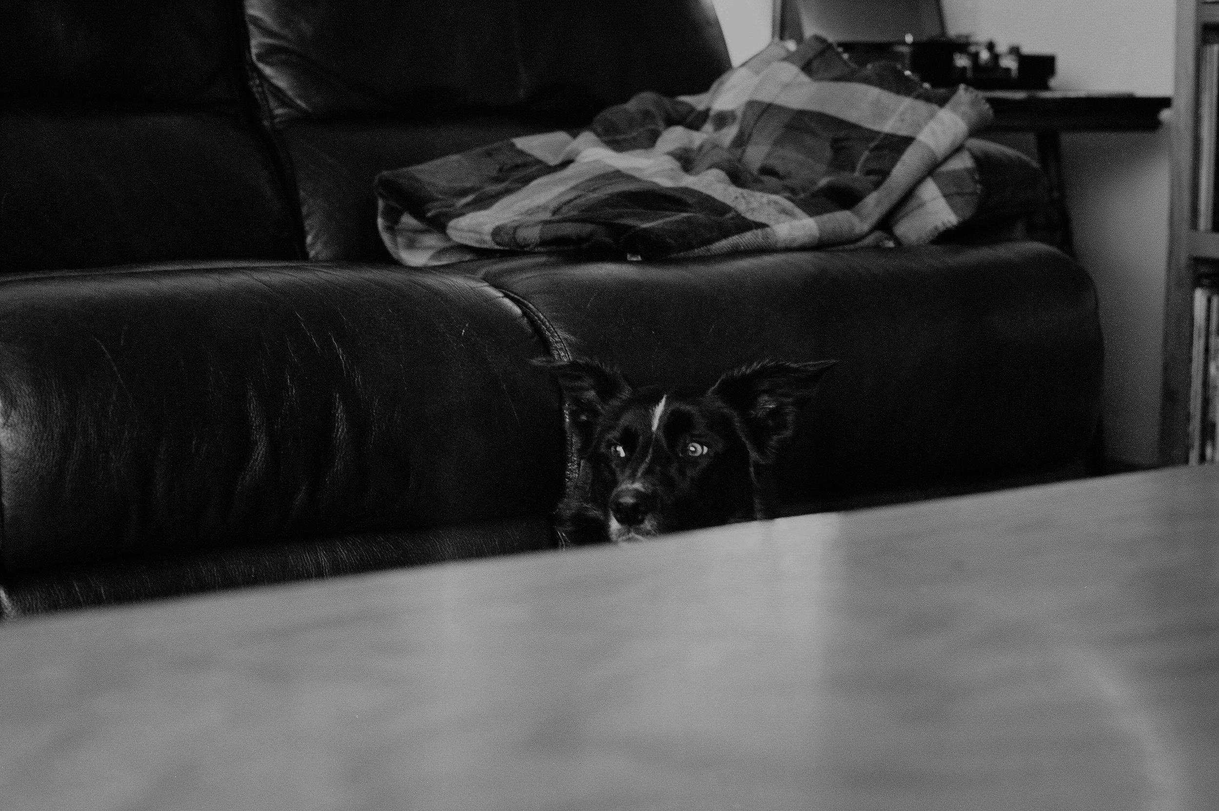 Ivy Lou's peekaboo.