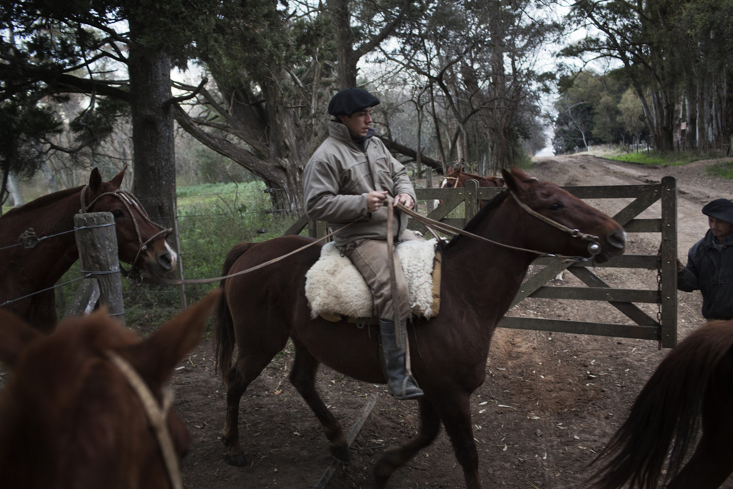 Gaucho Pablo Chavez leads our horses for a days work.