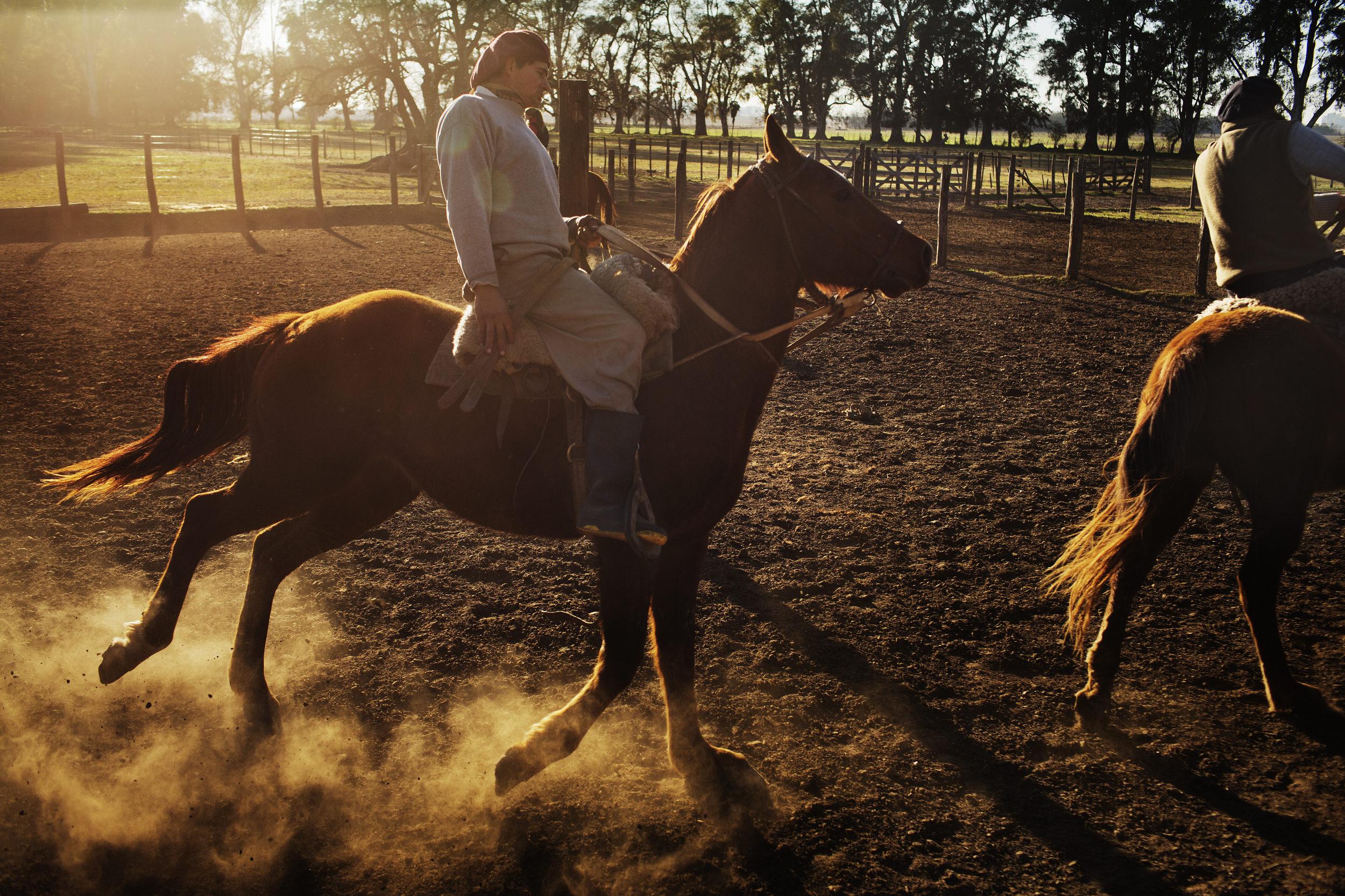 Gaucho Jose Luis Semorile trains a young quarter horse on Estancia La Argentina.