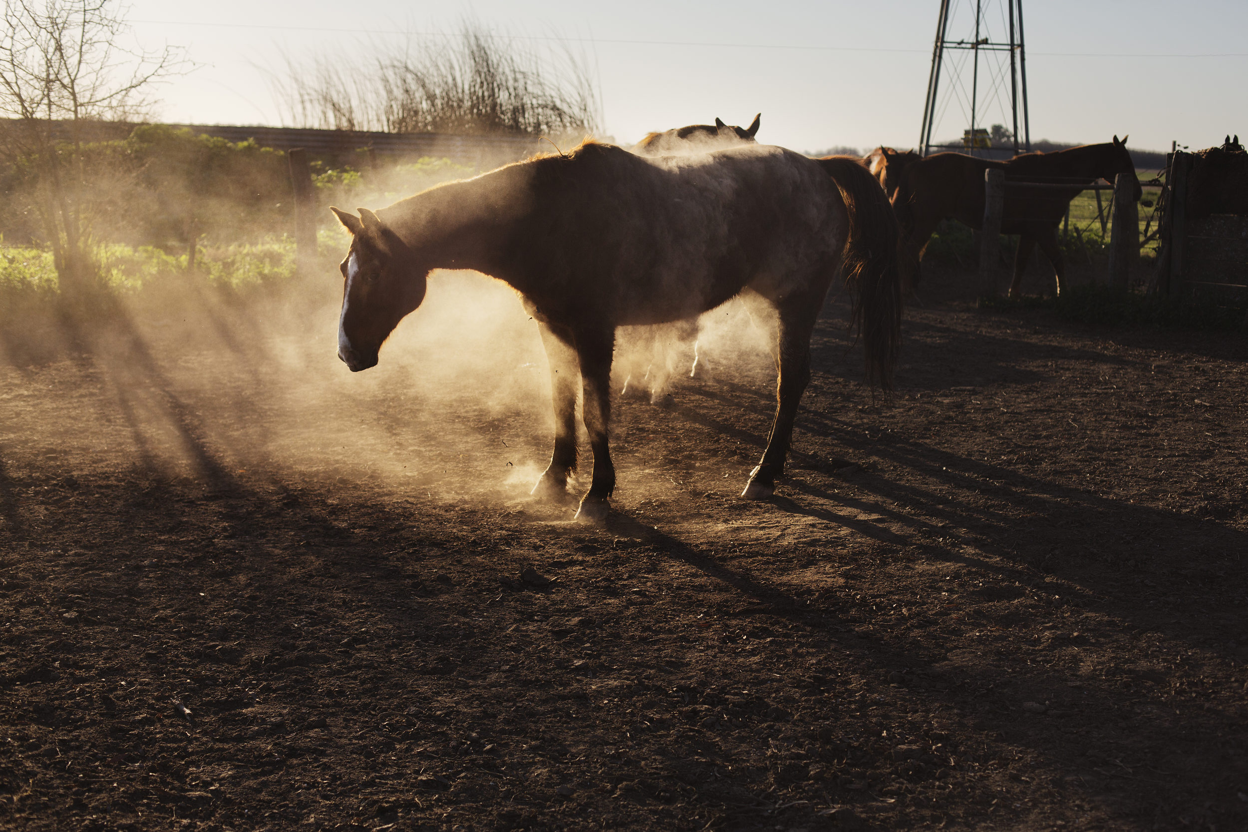 Dusty afternoon.