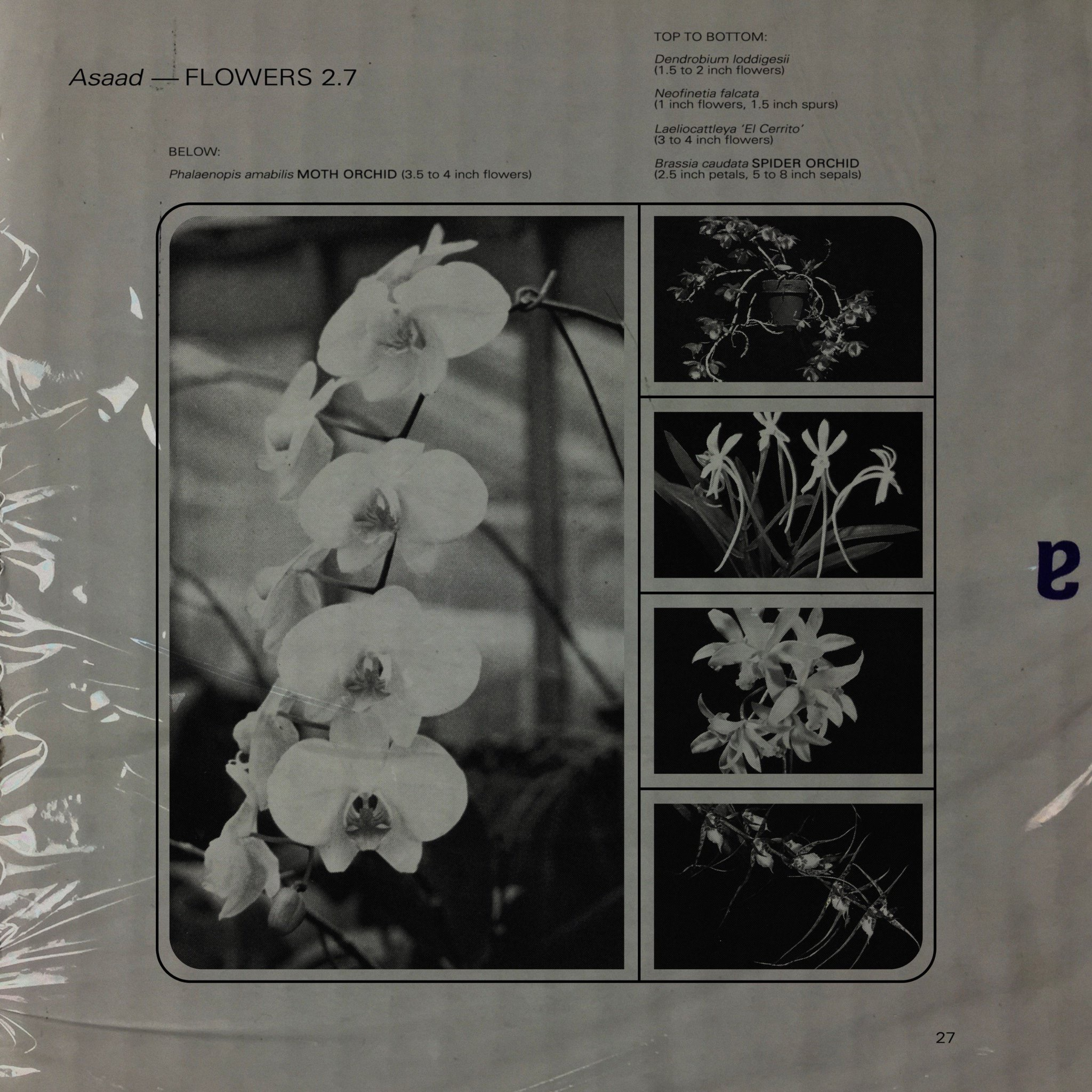 Asaad  Flowers 2.7  Engineer & Mixer