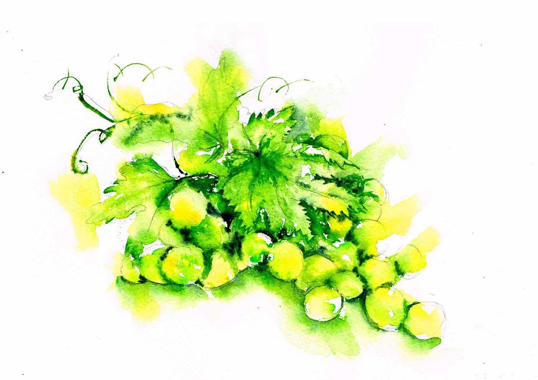 A4--art-print-Fruit-14-grapes-kw.jpg
