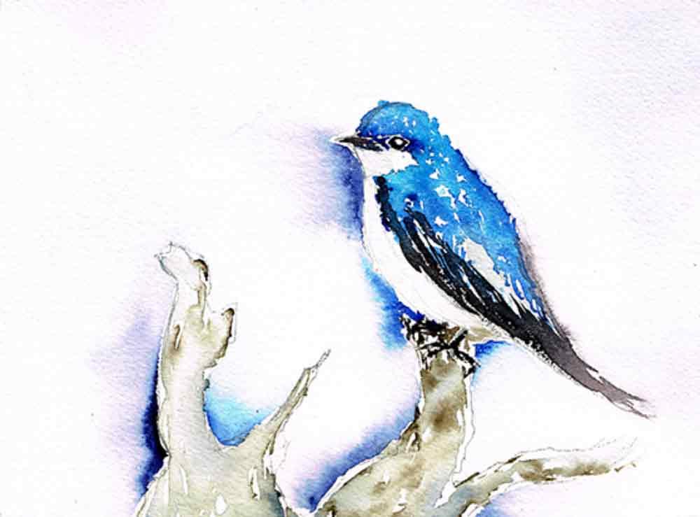 Bluebird-little-bird-no-9-kw.jpg