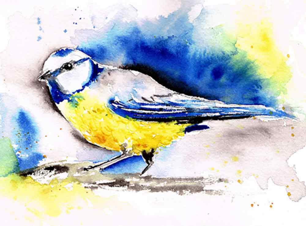 Blue-tit-little-bird-no-2-kw.jpg