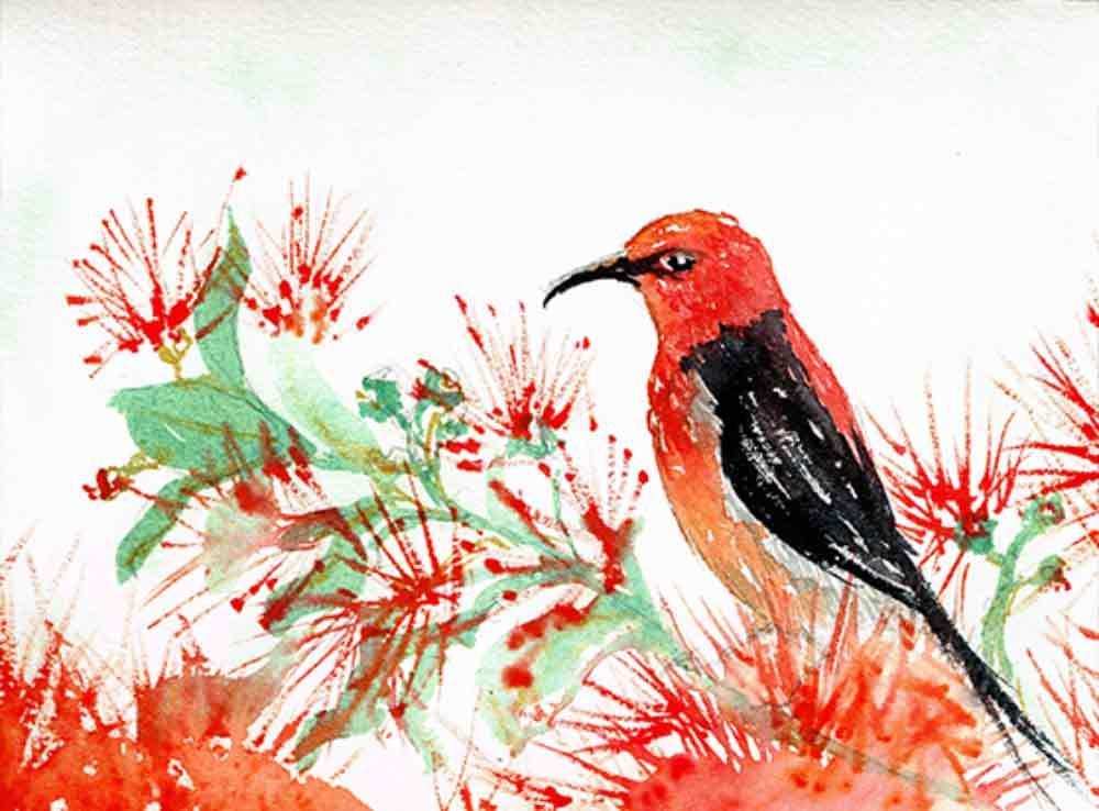 Crimsion-sunbird-Little-bird-no-10-kw.jpg