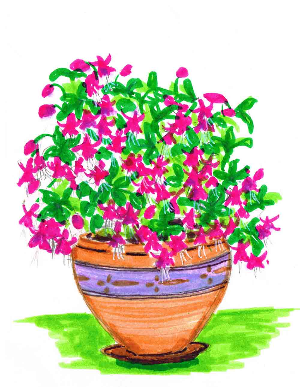 Fuschia-Plants-in-pots-no-13-kw.jpg