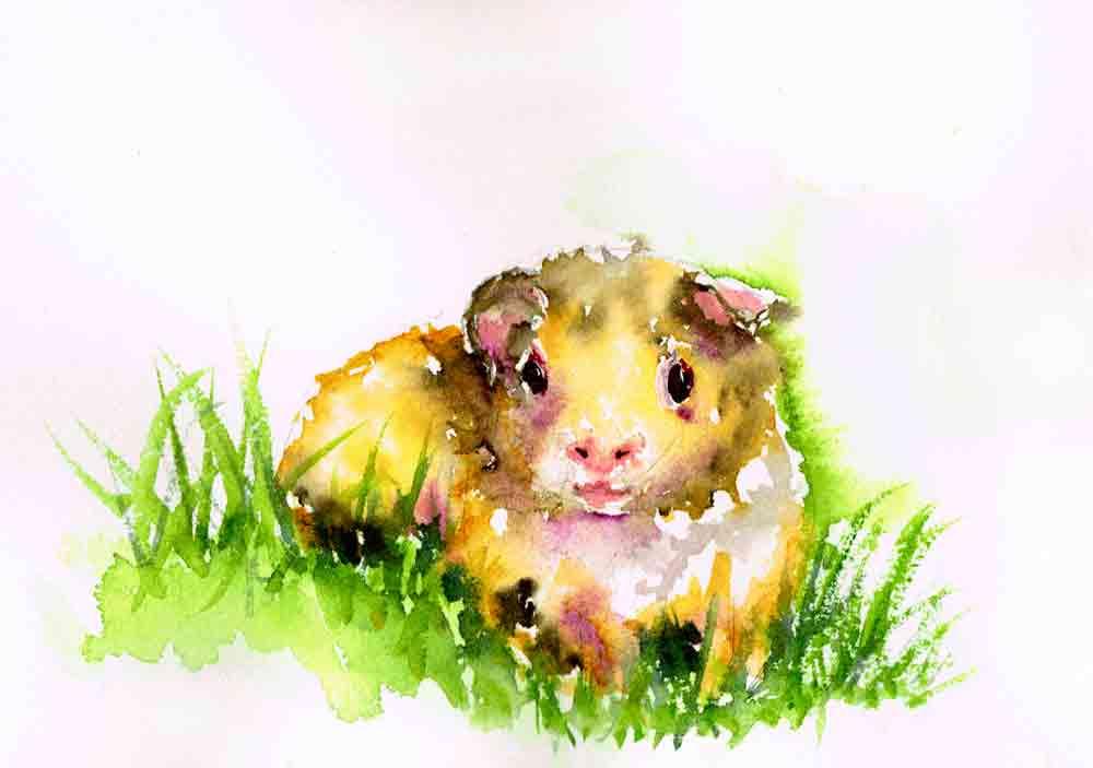 Little-critters-no-10-Guinea-Pig-kw.jpg