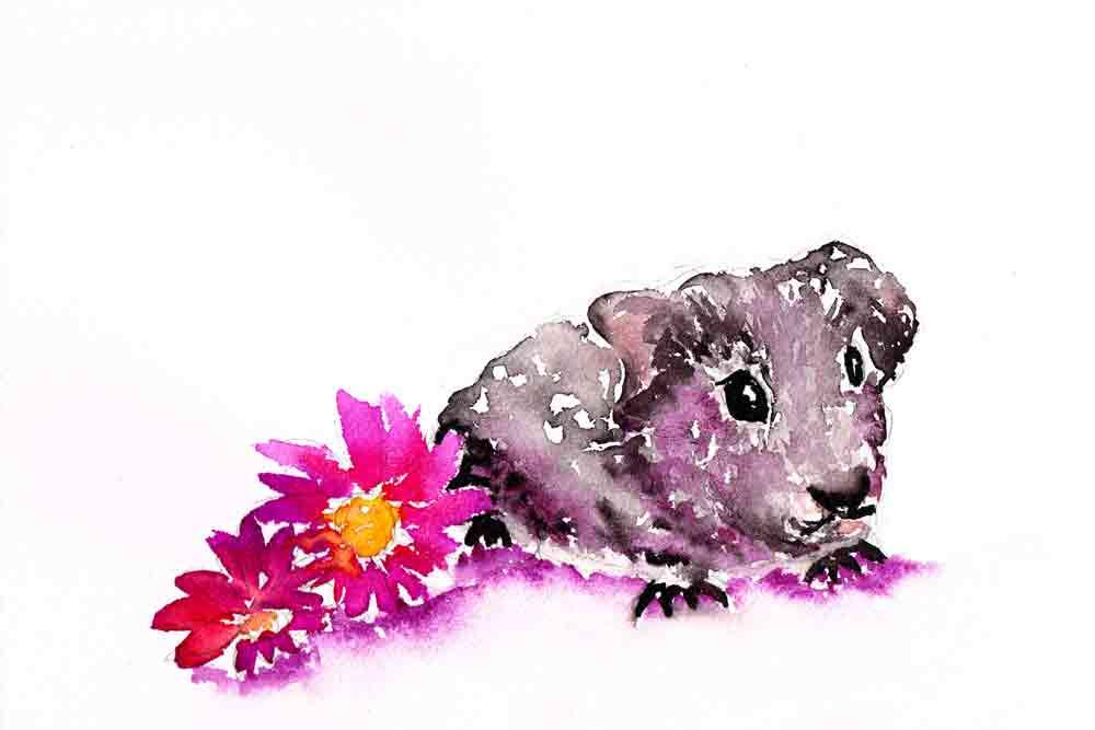 Little-critters-no-6-Hamster-kw.jpg