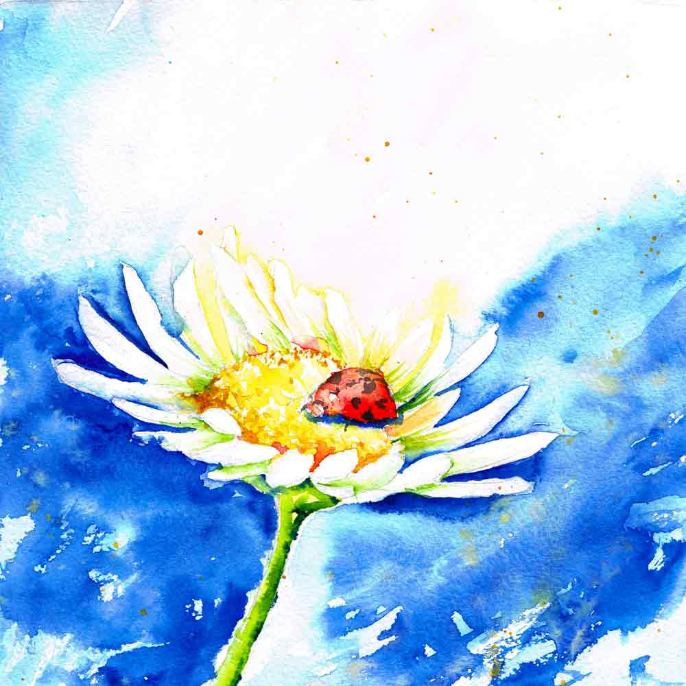 Bugs-Blooms-no-7-white-daisy-blue-sky-kw.jpg
