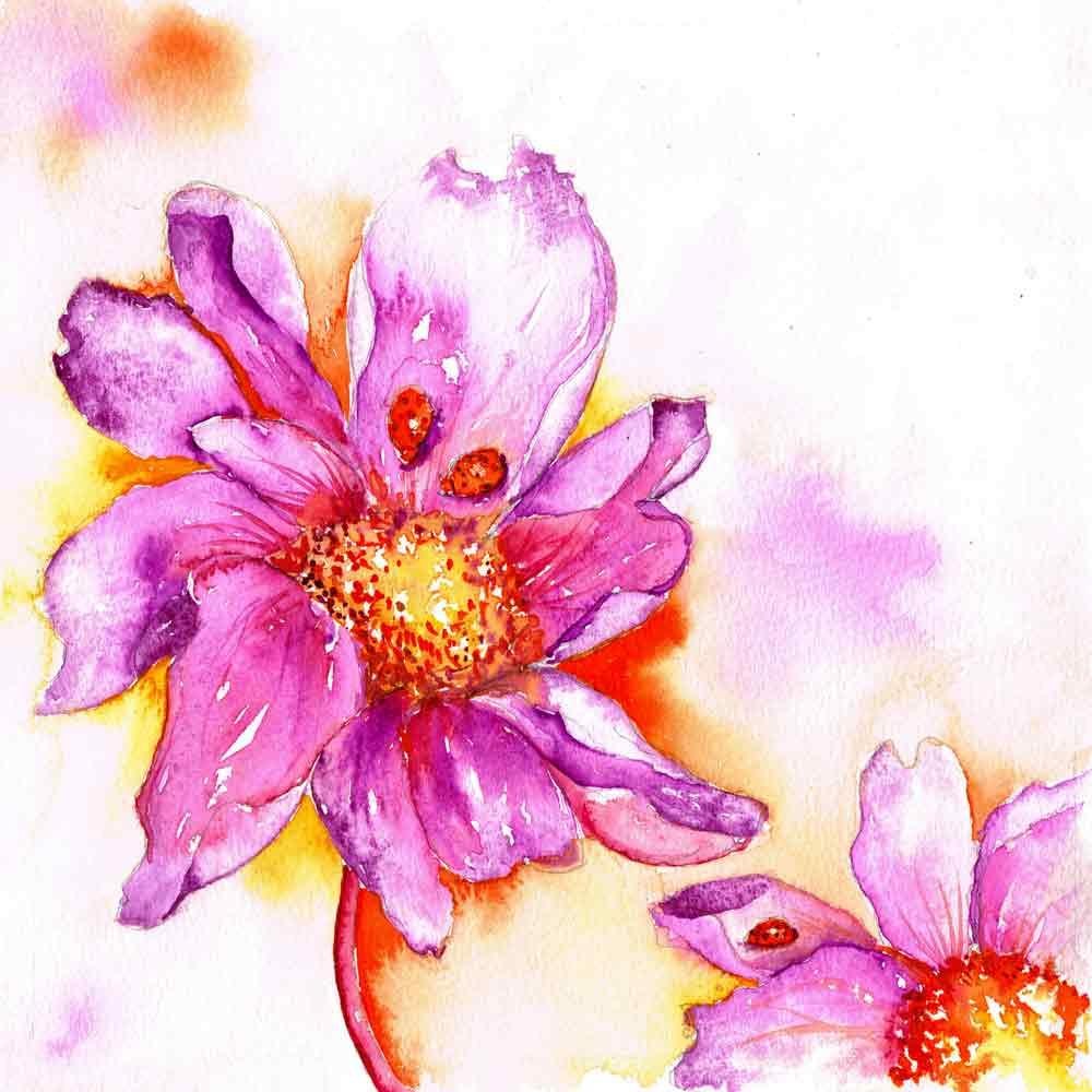 Bugs-Blooms-no-3-Pink-cosmos-orange-ladybird-kw.jpg