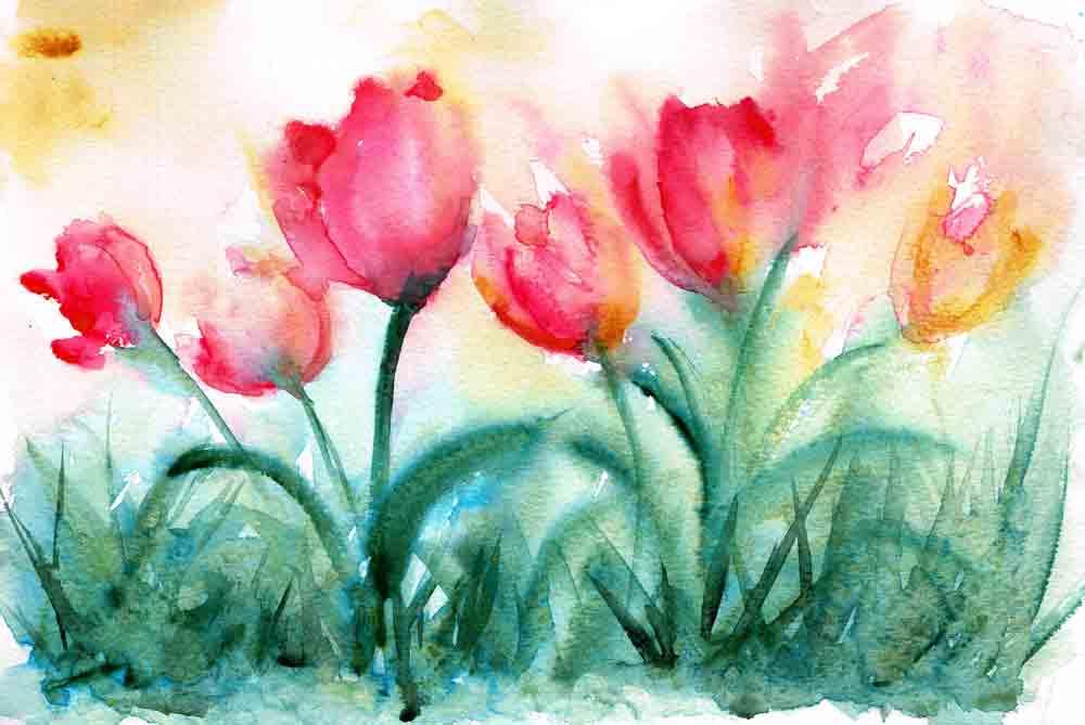 Tulips-no-1-red-field-kw.jpg