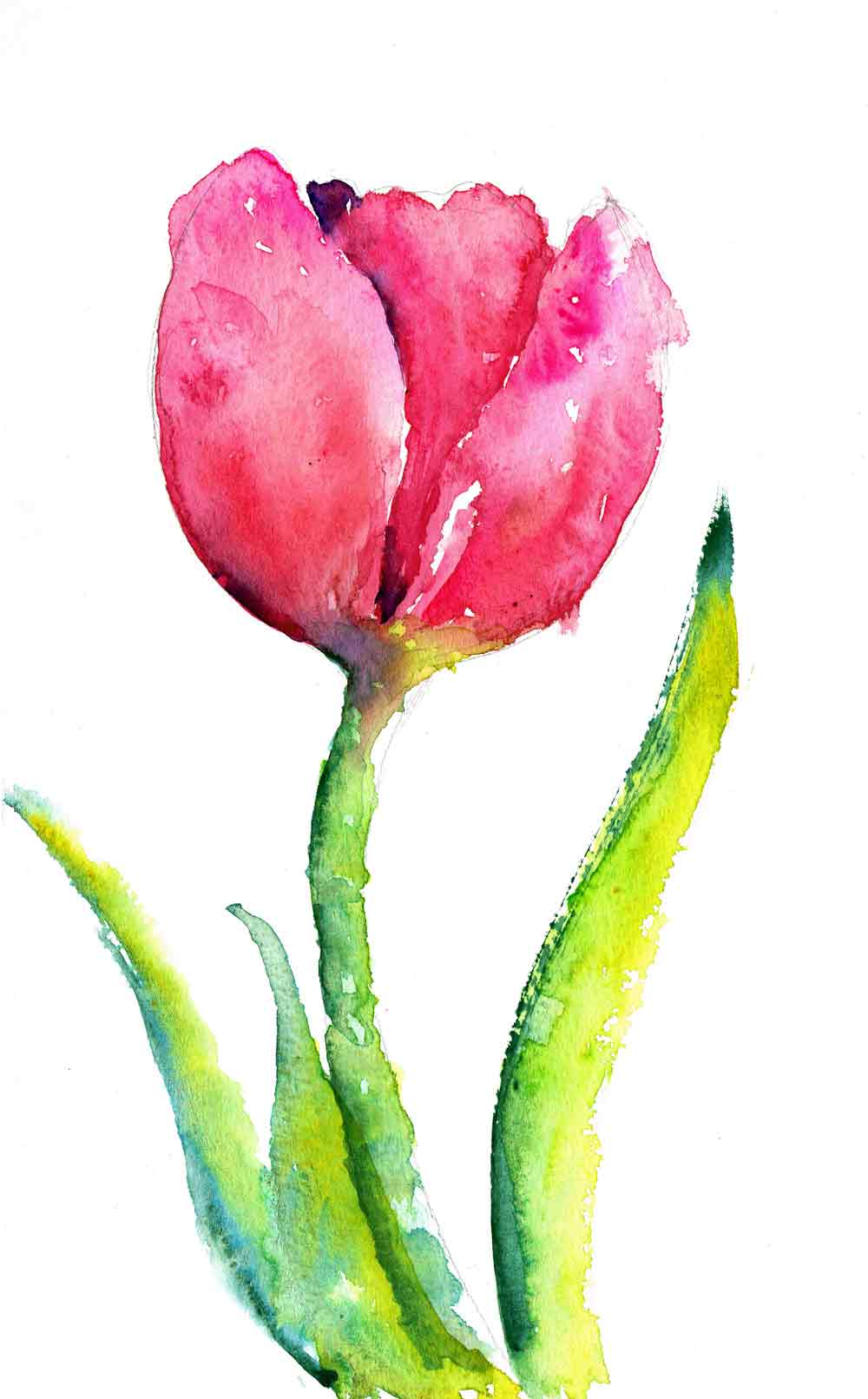 Tulips-no-7-single-purple-kw.jpg