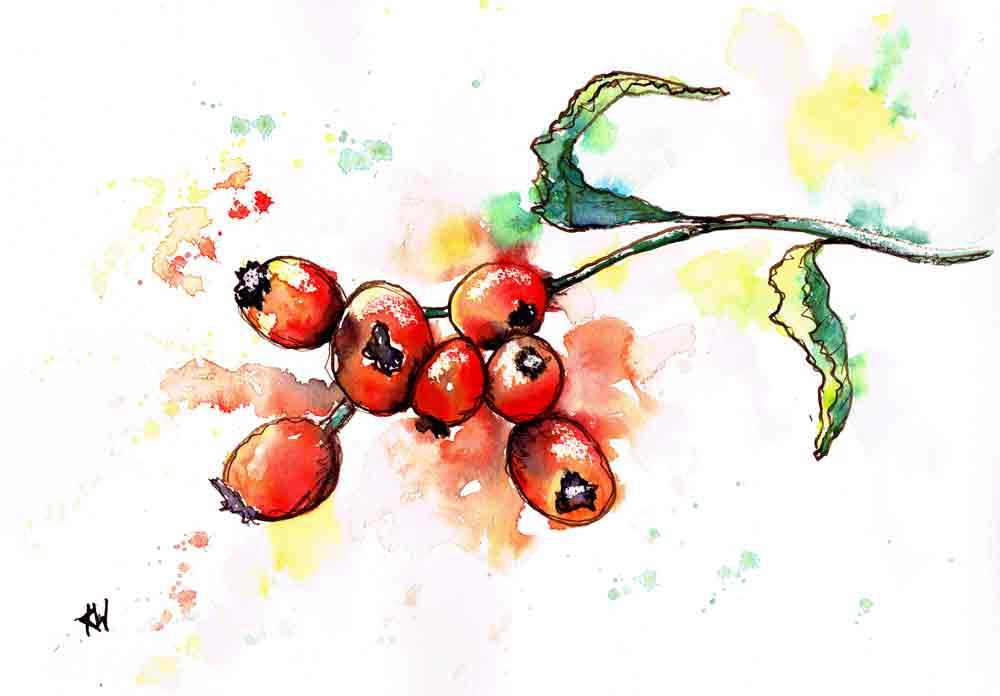 berries-red-branch-no-1-kw.jpg