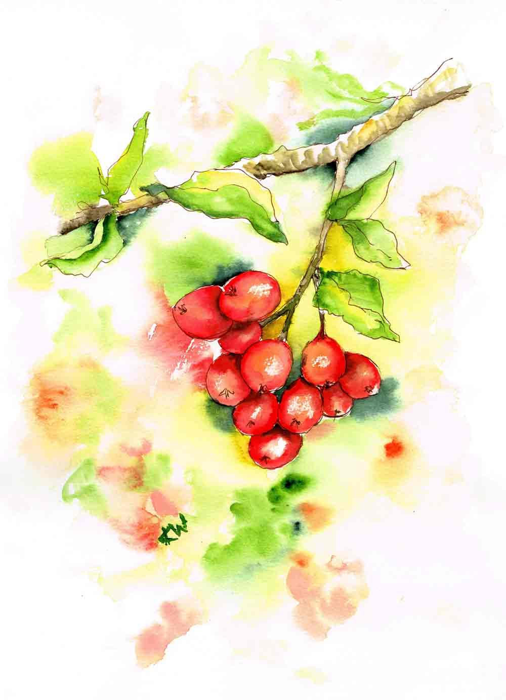 berries-red-bunch-kw.jpg