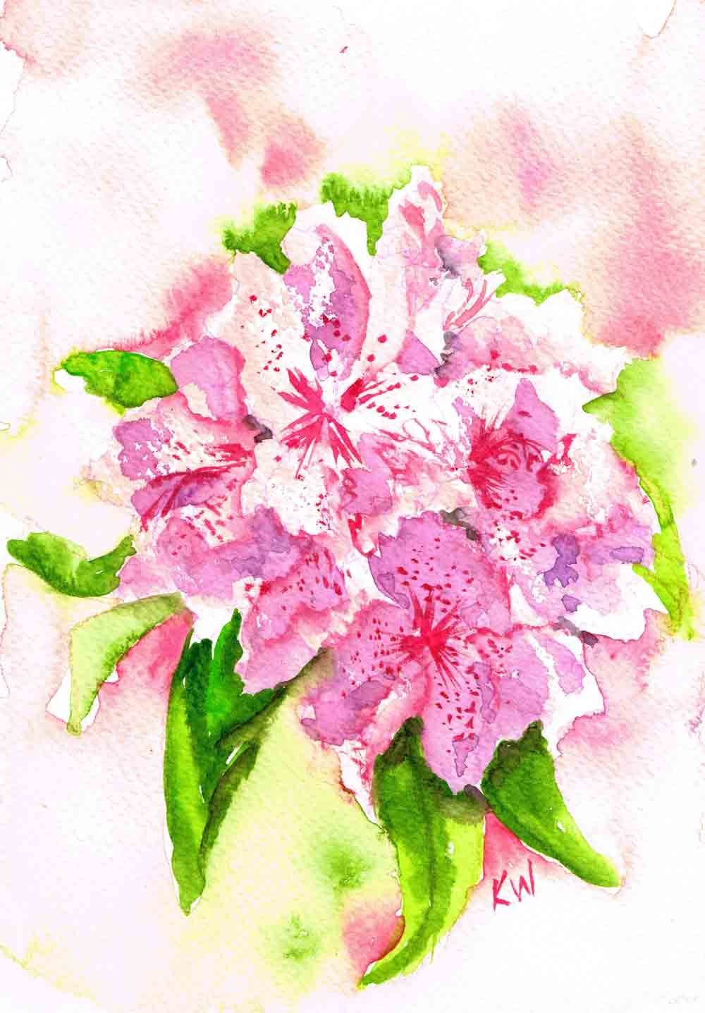 Rhododendrhon-Gardens-Small-single-pink-kw.jpg