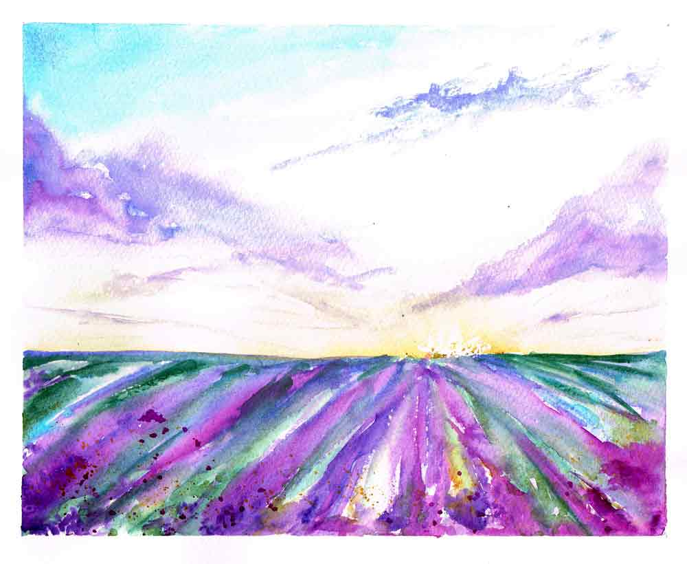 Lavender-rows-and-sky-kw.jpg