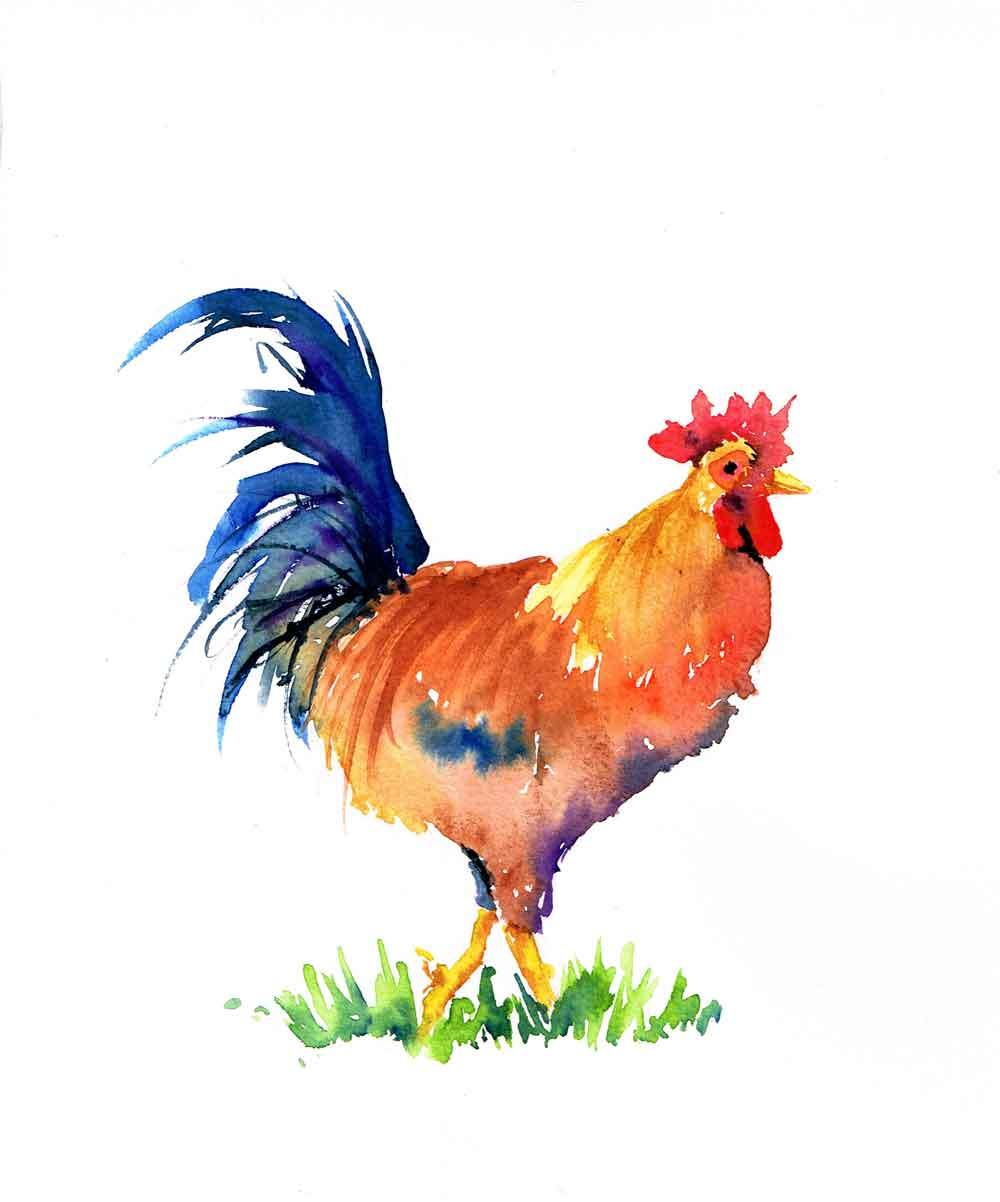 Rainbow-roosters-no-1-kw.jpg