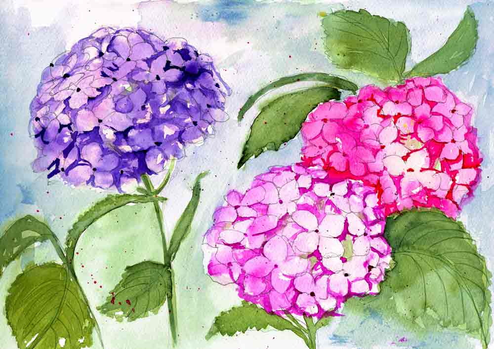 """Watercolour Flowers - Hydrangeas (Watercolour on Paper """"9 x 12"""") This painting was created in 2015, and one of the first that I was happy with!"""