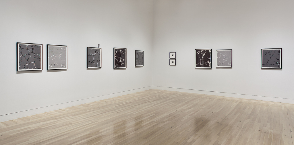 Installation view at the Hammer Museum, Los Angeles   Made in L.A. , June 2, 2012-September 2, 2012, Photograph by Brian Forrest