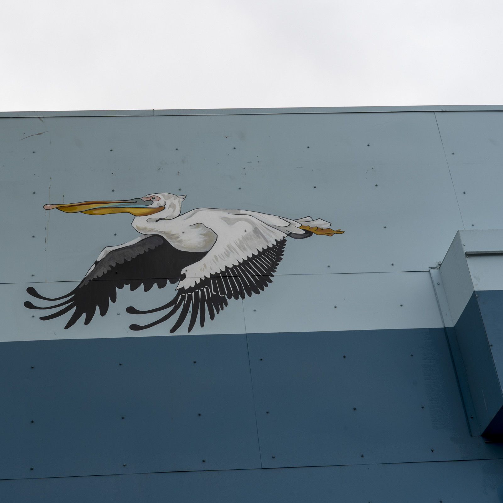 pelican.2.jpg