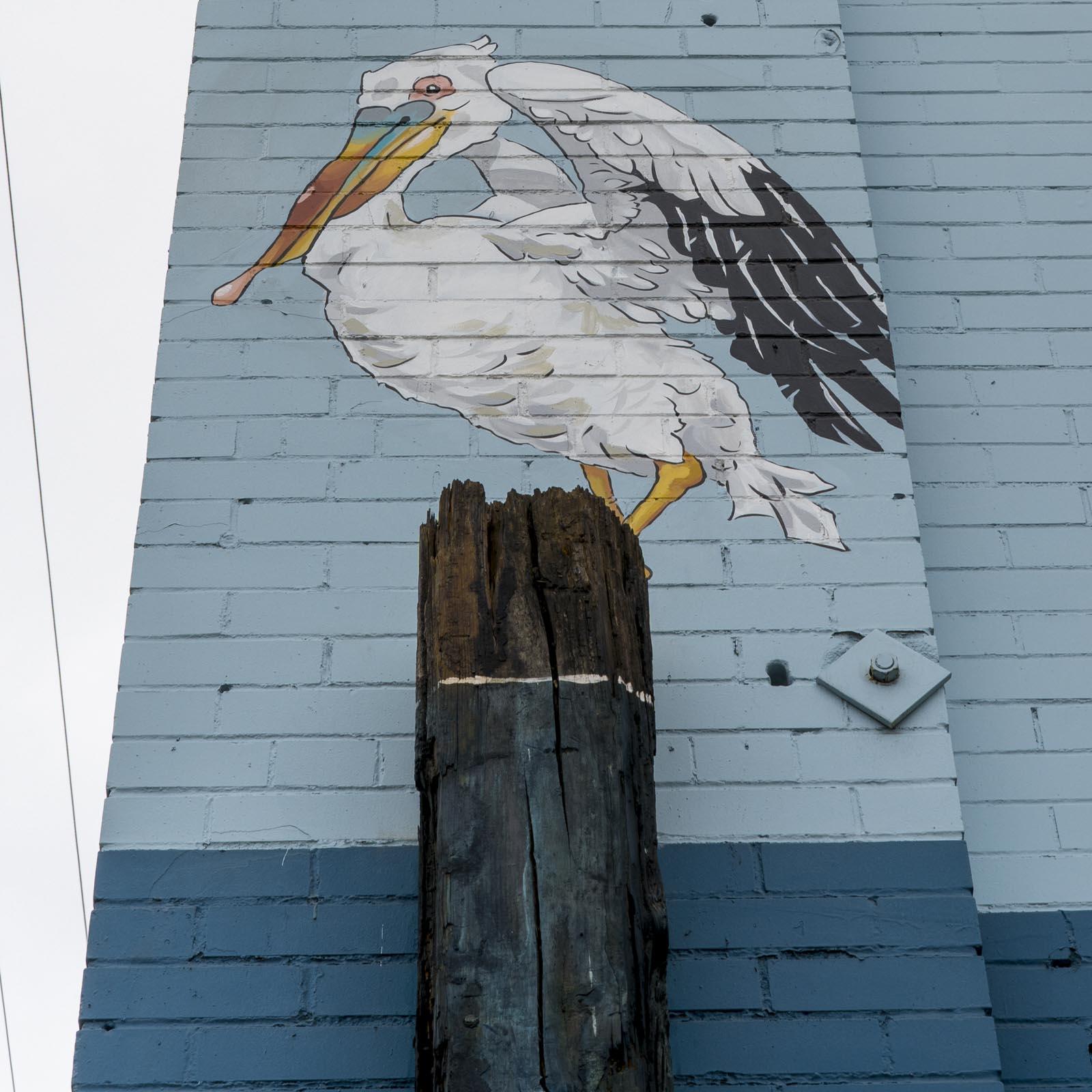 pelican.6.jpg