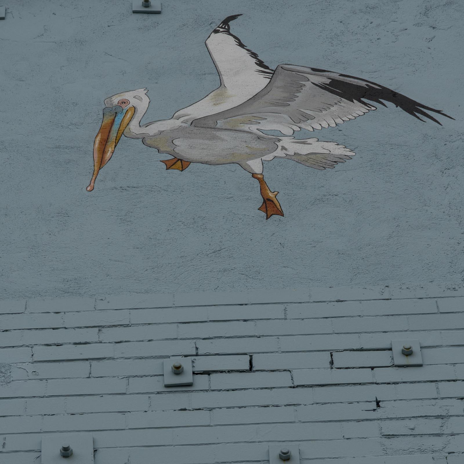 pelican.7.jpg