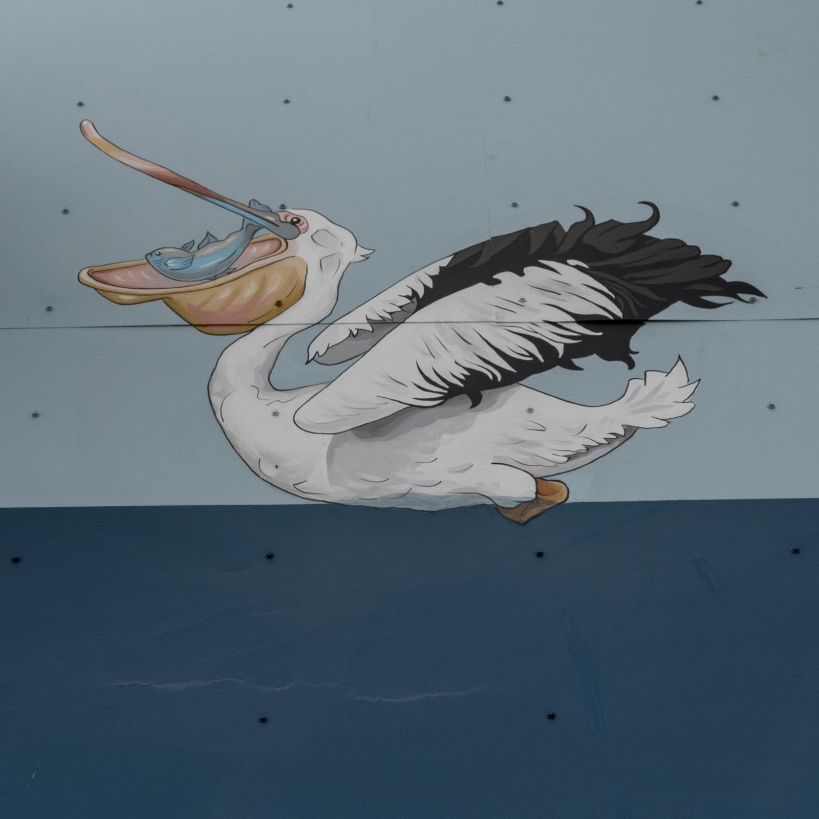 pelican.10.jpg