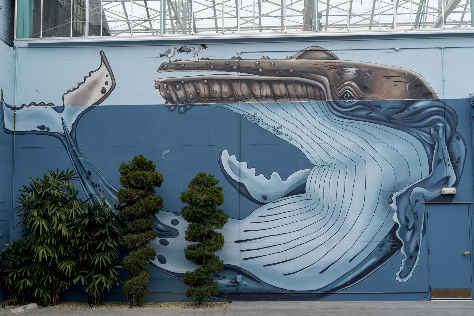whale.1.jpg