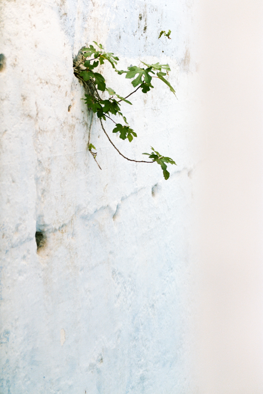 Morgane Erpicum Morocco in Bloom