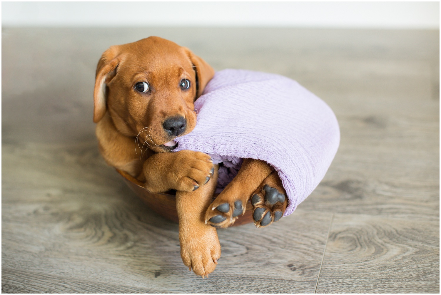 Amazing Day Photography - Puppy Newborn Session - Lifestyle Newborn Session - Dog Photographer (2).jpg