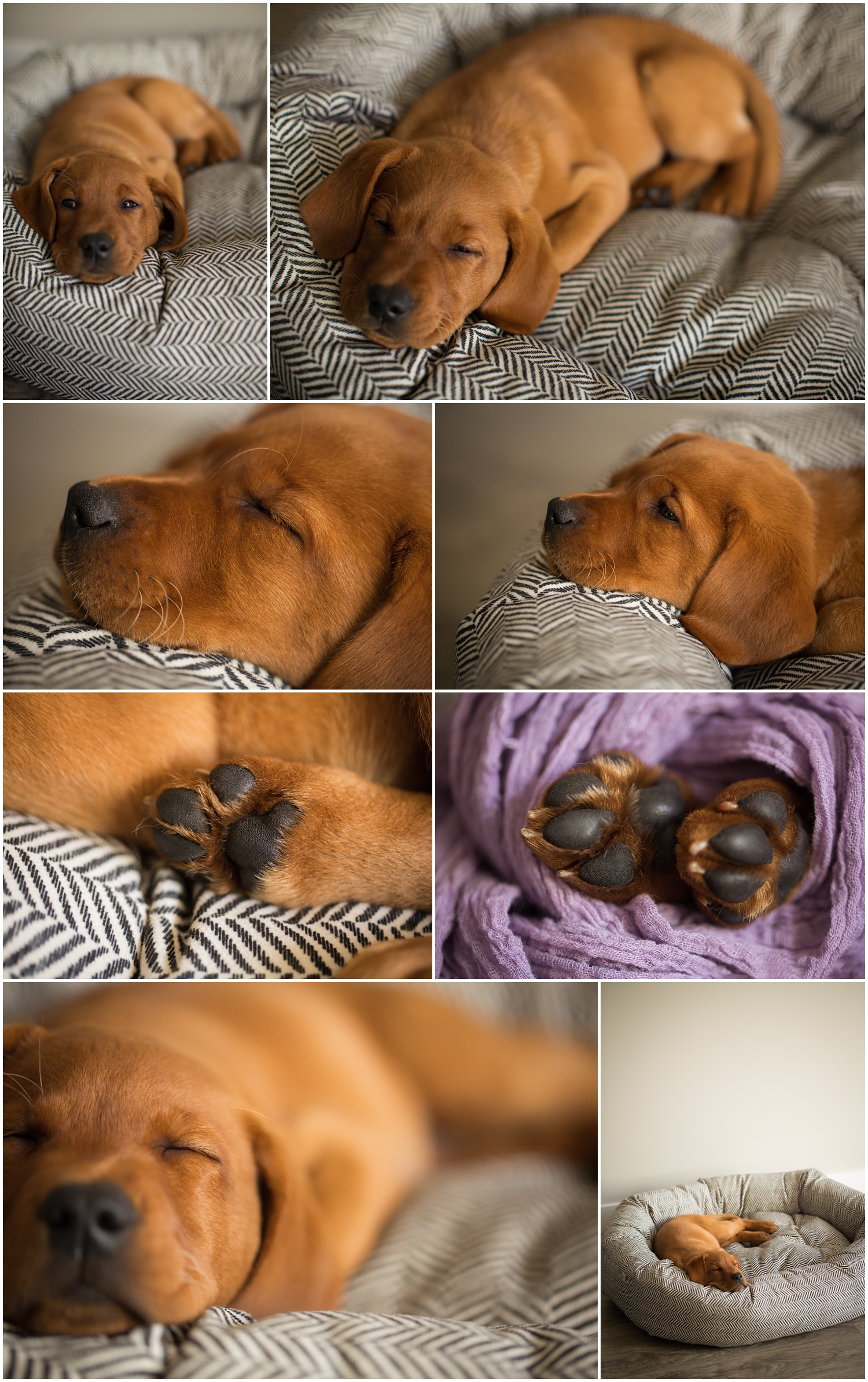 Amazing Day Photography - Puppy Newborn Session - Lifestyle Newborn Session - Dog Photographer (10).jpg
