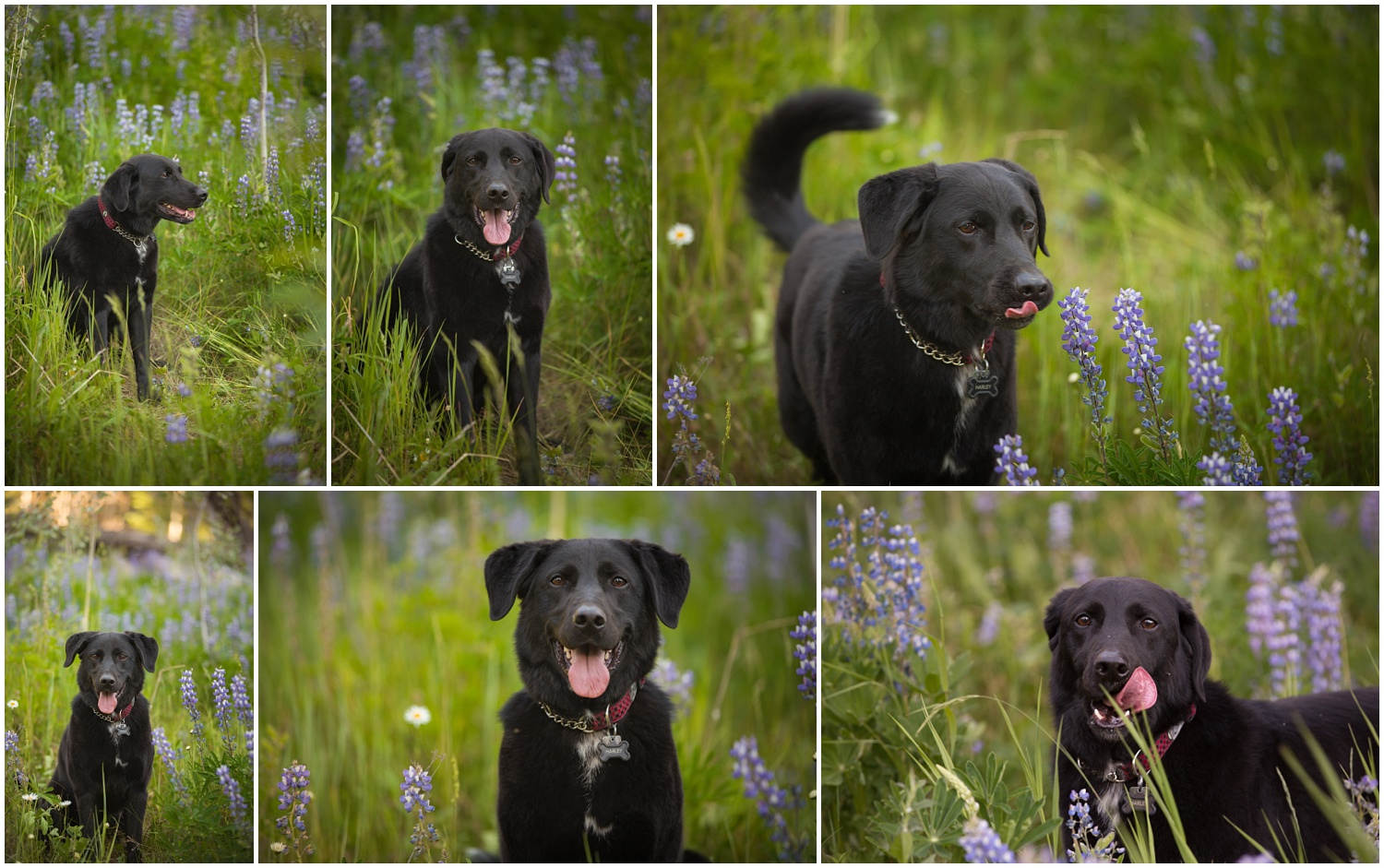 Amazing Day Photography - Cariboo Family Session - Doggy Session - Lac Des Roches Family Session (3).jpg