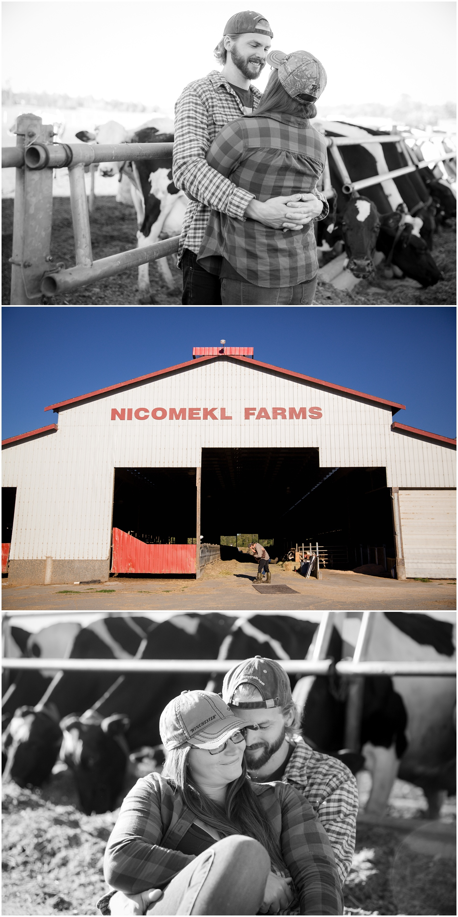 Amazing Day Photography - Dairy Farm Engagement Session - Langley Engagement Photographer (2).jpg
