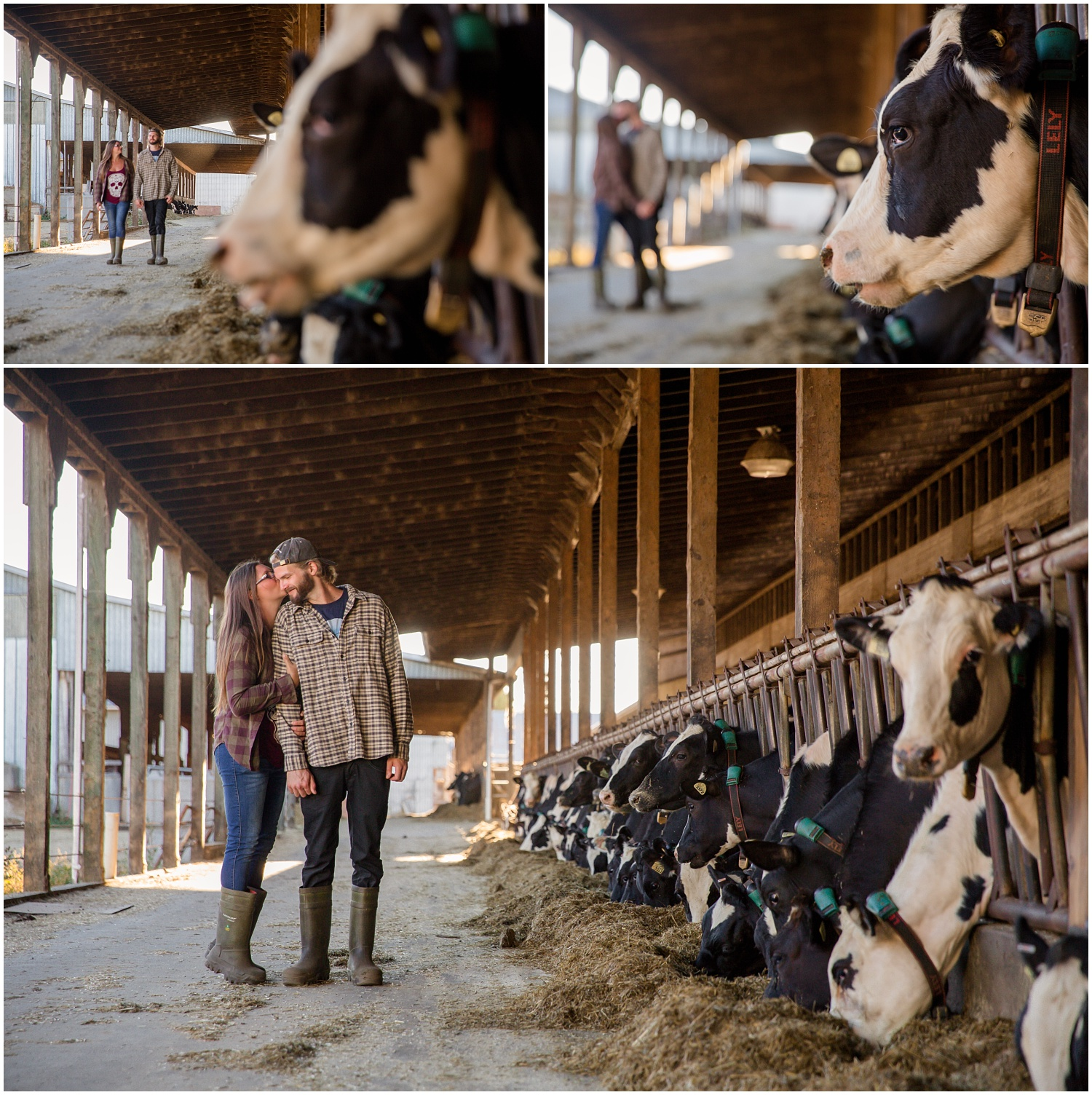 Amazing Day Photography - Dairy Farm Engagement Session - Langley Engagement Photographer (9).jpg