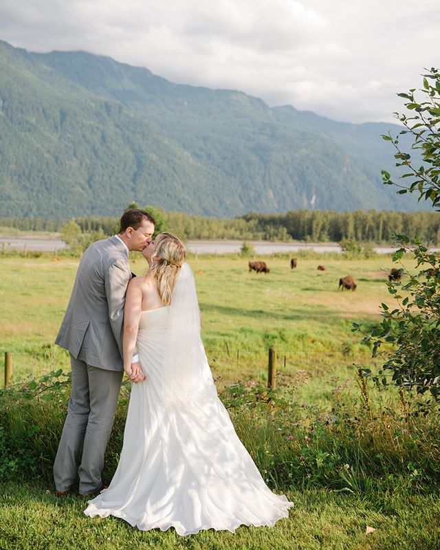 Just an amazing couple hanging out with the bison @fraserriverlodge_weddings