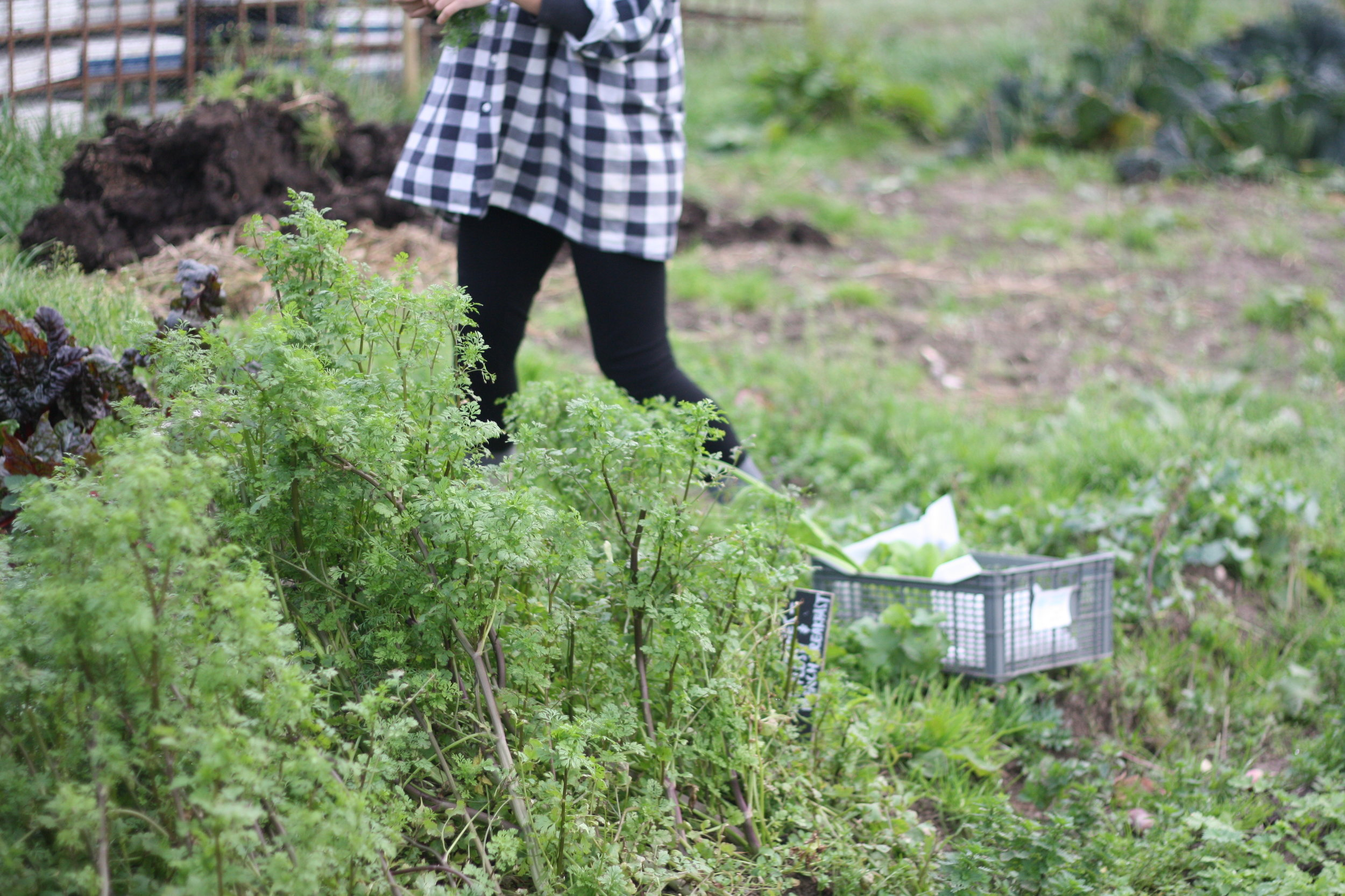 A Woven Plane – socks for women - journal – One Field Farm, farming in check print dress