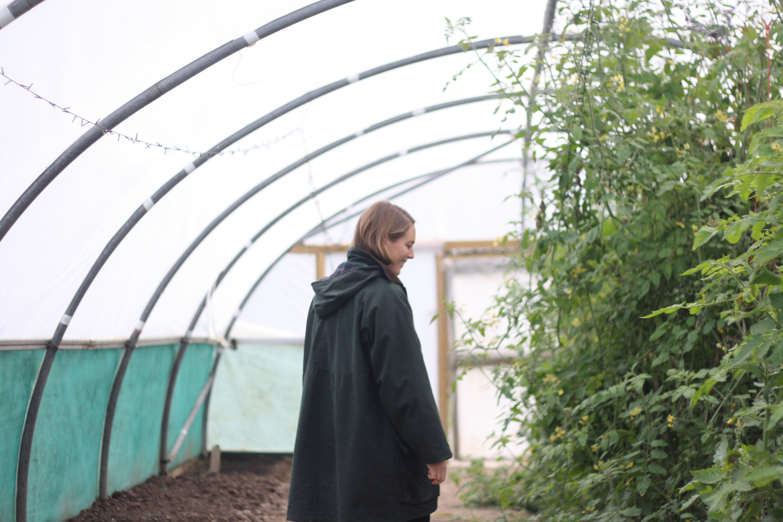 A Woven Plane – socks for women - journal – exploring One Field Farm