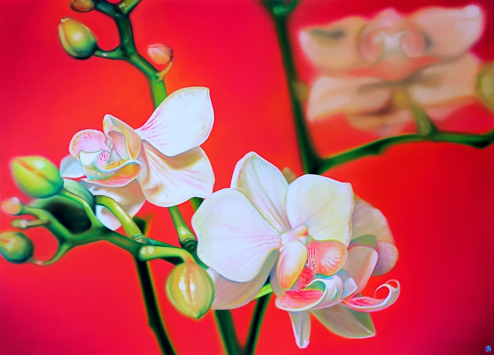 'Pink Orchid' oil on canvas - 80x110cm
