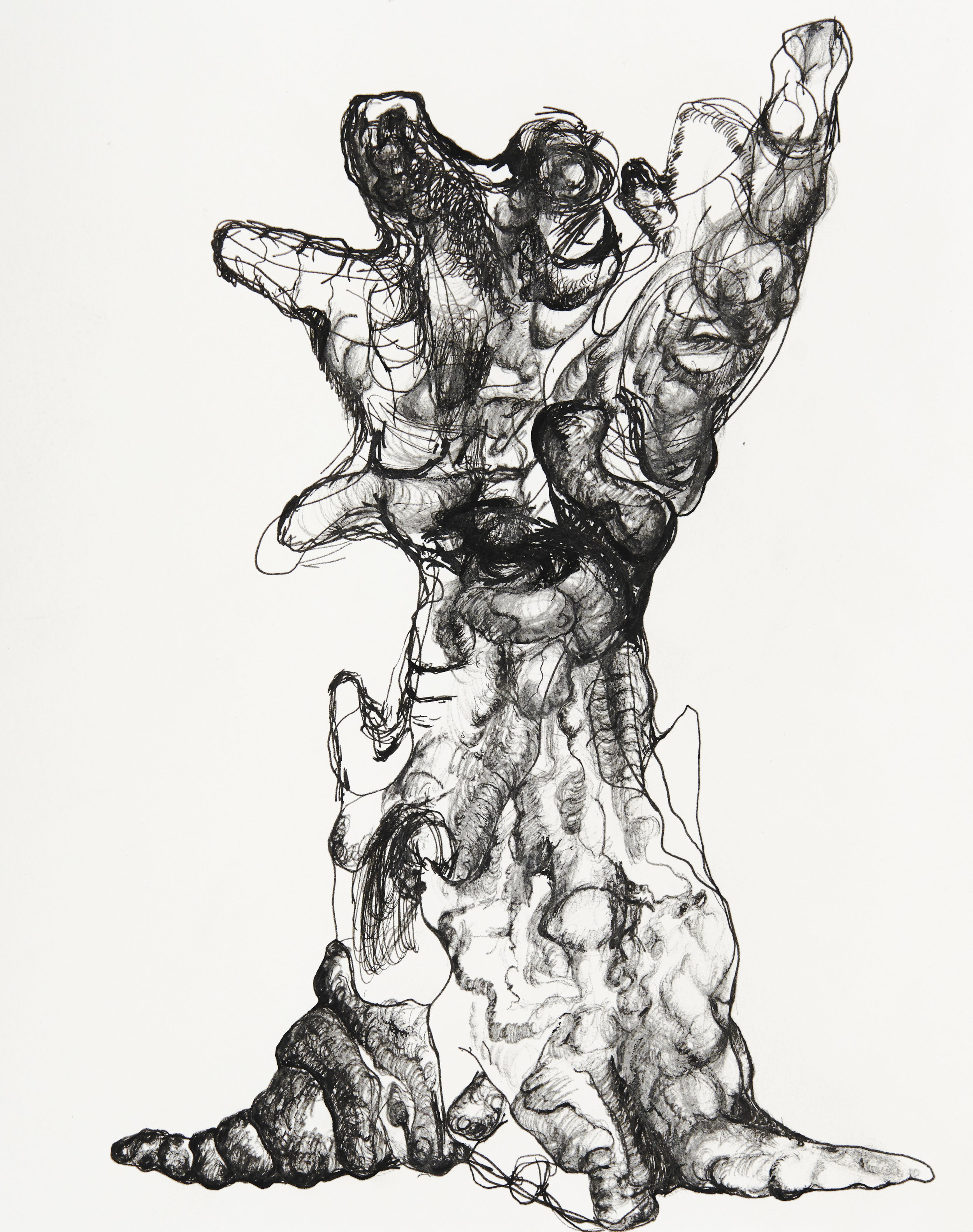 Mutant tree study, 2018                                                                                                        24 x 30 cm, Ink pen on paper