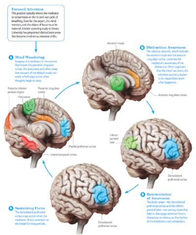 Courtesy of  Scientific American  © 2014