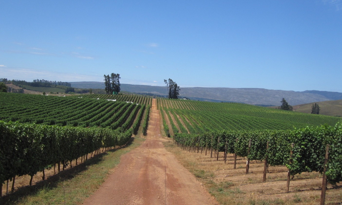 Vineyards in the Middle East
