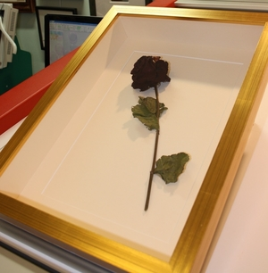 hampshire-picture-framing-3d-009.jpg