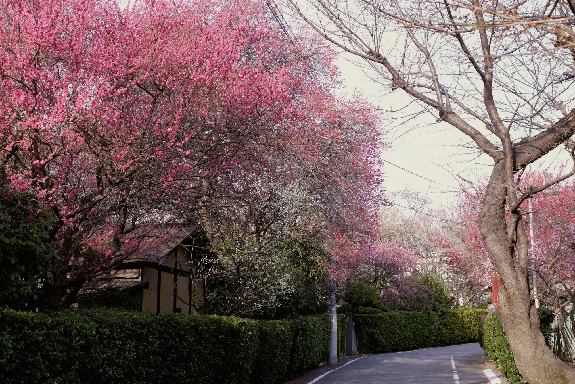 Photography: Takayuki Nakane