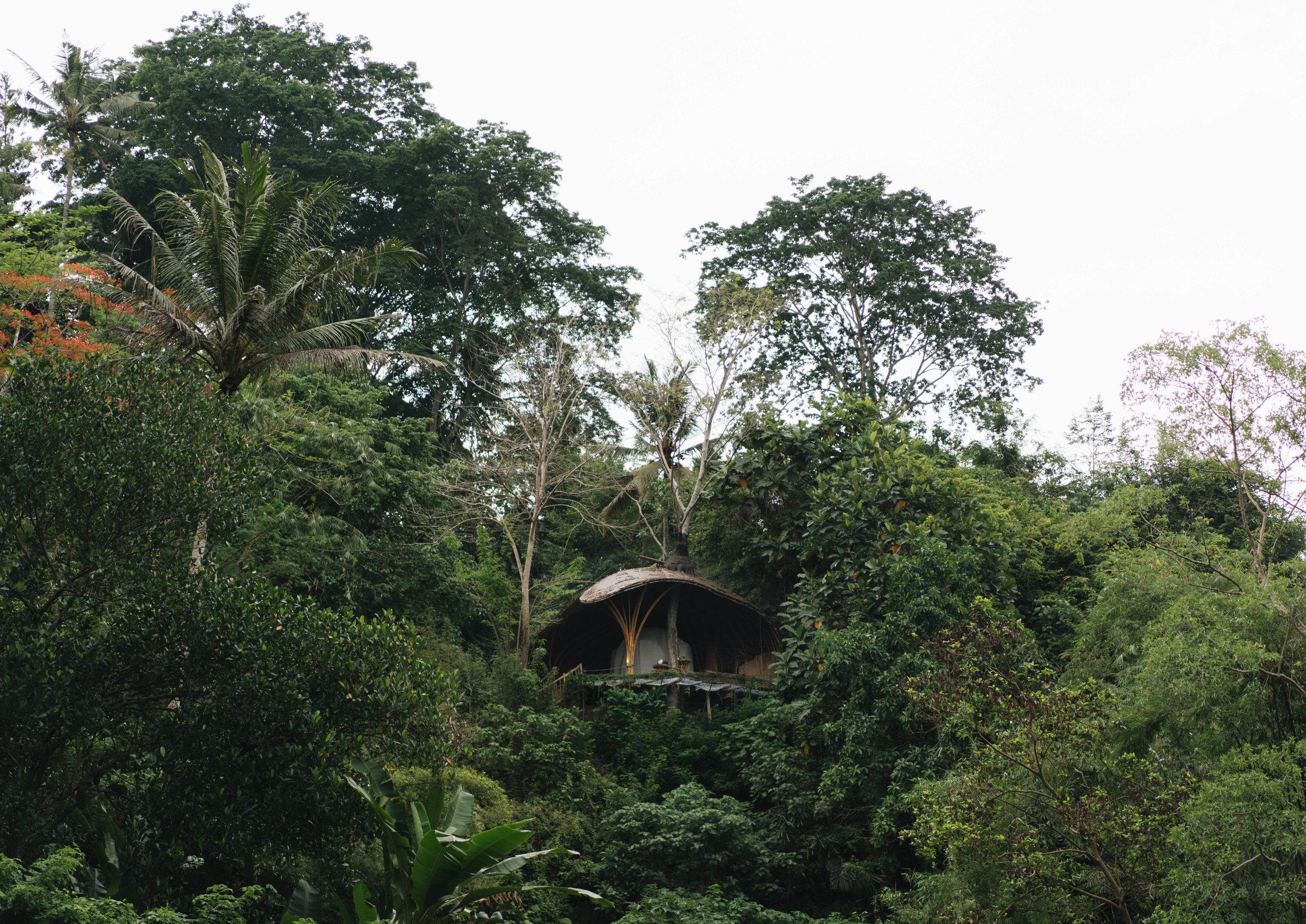 BambuIndah (1 of 1)-15.jpg