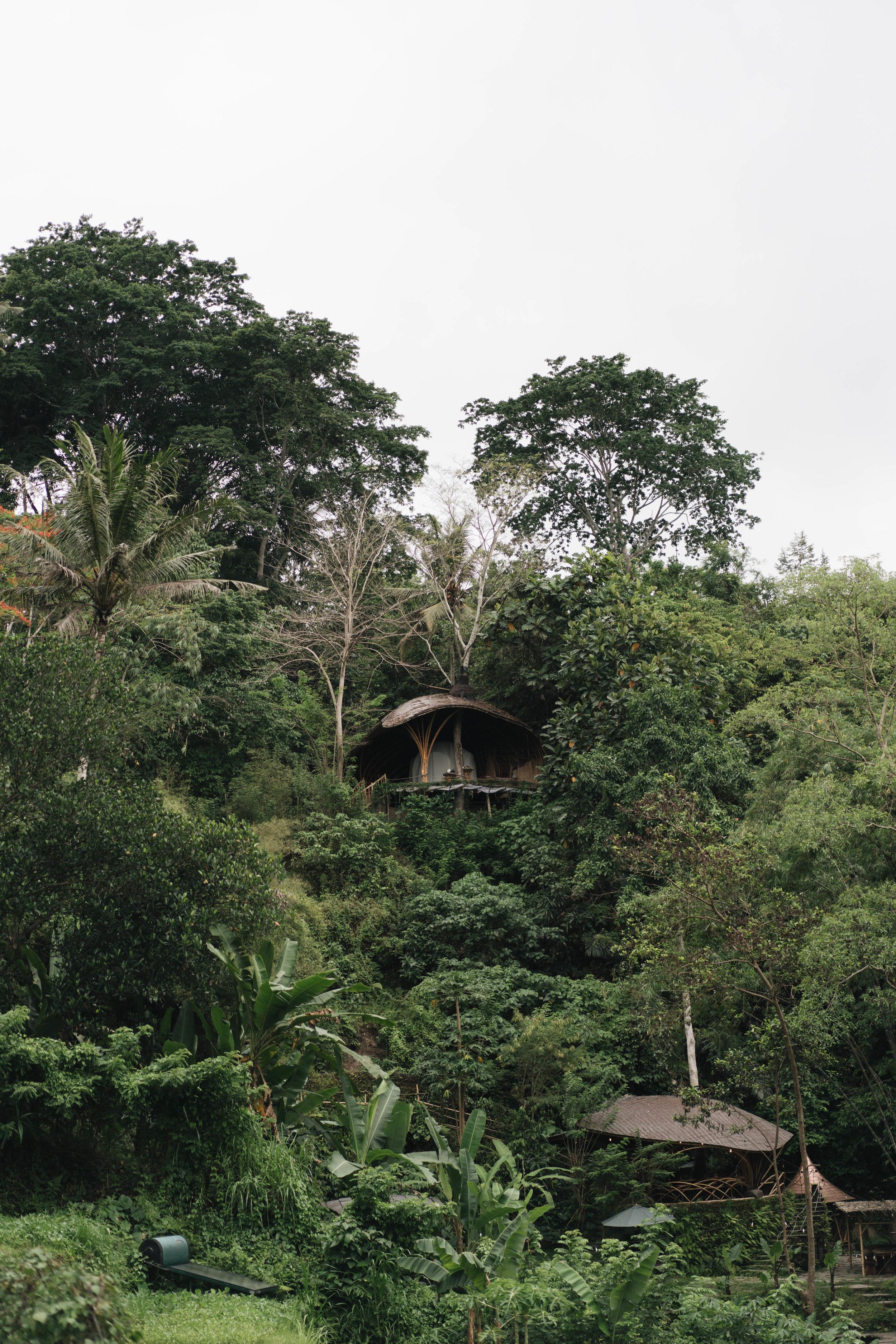 BambuIndah (1 of 1)-22.jpg