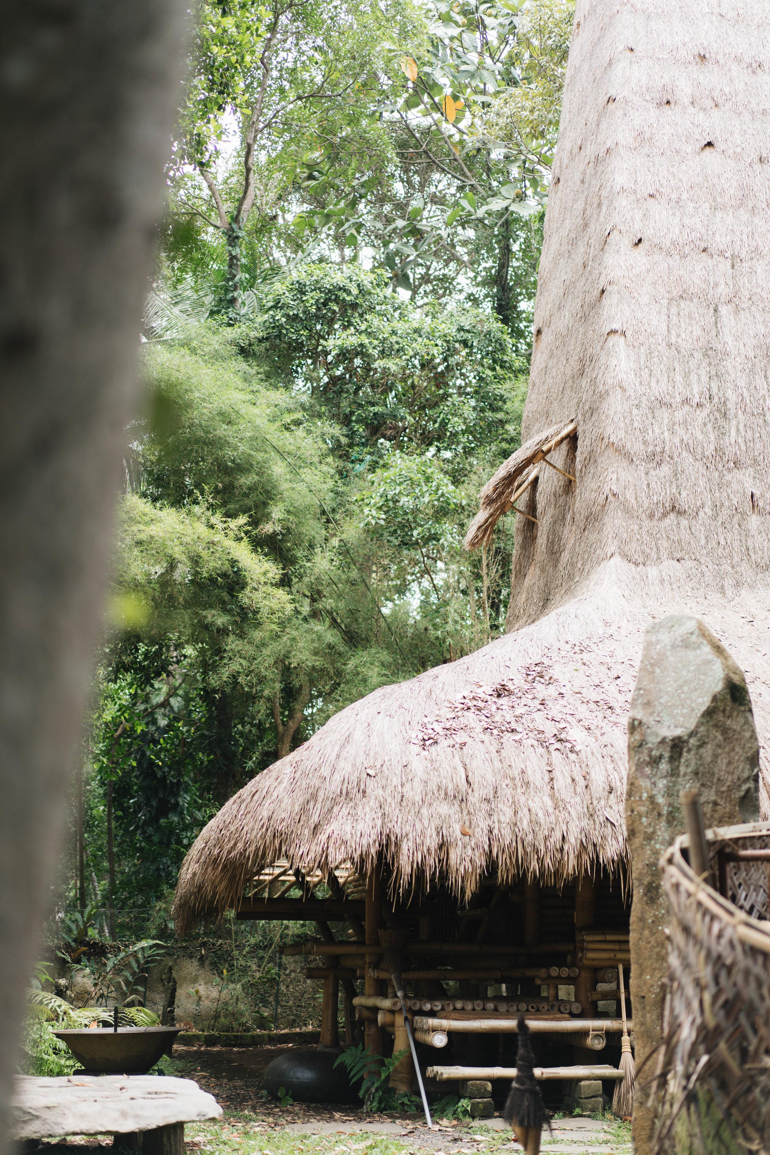 BambuIndah (1 of 1)-17.jpg