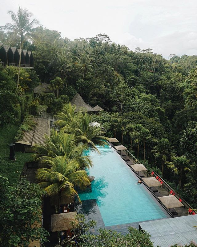 The beautiful @chapungsebali overlooking the lush jungle of Ubud 🌿 for more unique travel experiences, check our website, link in the bio.  #ubud #jungle #bali #indonesia #hotel #luxury #luxuryhotel #baliindonesia #balitravel