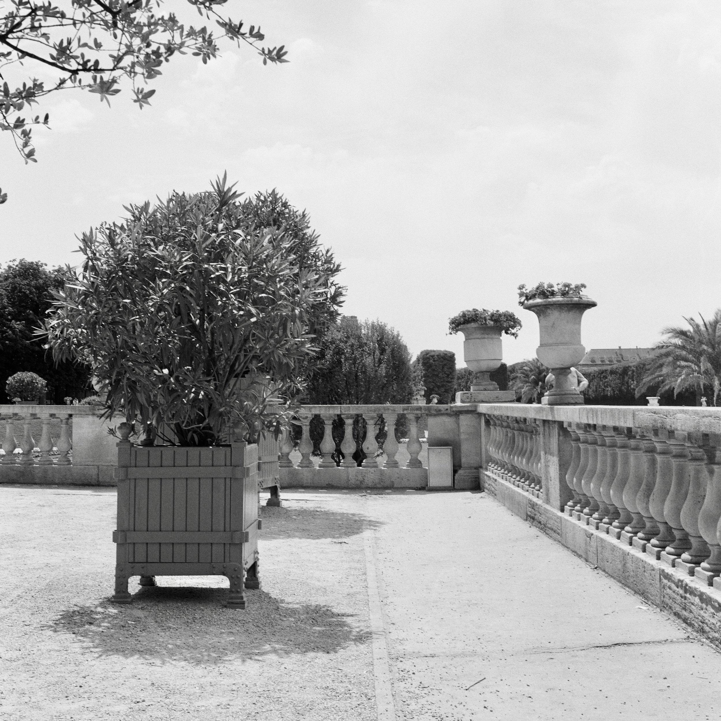 Jardin du Luxembourg (2019) Paris